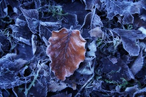 Frosty Leaves by Gerla Brakkee